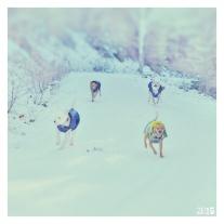 Perrhijos en la nieve
